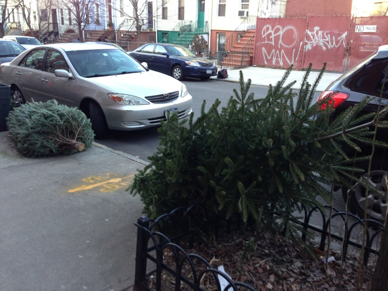 Discarded Christmas dreams in Brooklyn. I mean trees. Discarded trees