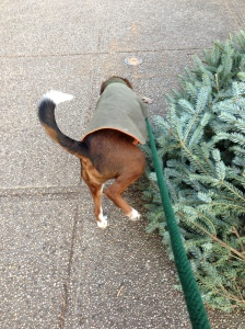 Lorenzo peeing on discarded tree. No one looked at me funny when I took this picture. JK, everyone did!